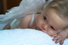 Bebê do anjo Fotos de Stock Royalty Free
