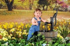 Bebê do narciso amarelo imagens de stock