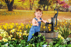 Bebê do narciso amarelo imagem de stock royalty free