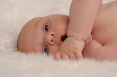 Bebê 2 do tapete da pele do urso Fotografia de Stock