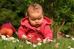 Bebê e flor Foto de Stock