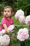 Bebê e peonies Imagem de Stock