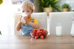 Bebê feliz que come morangos com leite foto de stock royalty free