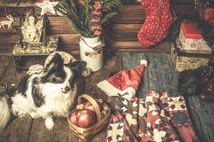 Bebê Jesus e cartão bonito do xmas do animal de estimação Imagens de Stock Royalty Free