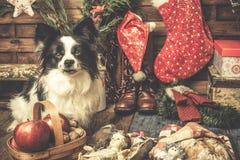 Bebê Jesus e xmas bonito do cão Imagem de Stock