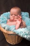 Bebê na cesta Fotos de Stock