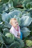 Bebê na planta do repolho Imagens de Stock