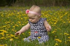 Bebê nos dentes-de-leão Fotos de Stock Royalty Free