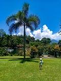 Bebê pequeno bonito sob o jogo da palma no parque fotografia de stock