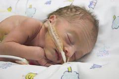 Bebê prematuro Imagem de Stock Royalty Free