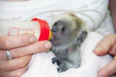 Bebê preto do furo Imagem de Stock Royalty Free