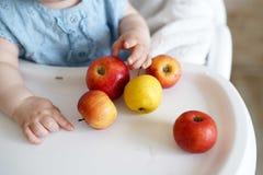 Bebê que come o fruto maçãs amarelas e vermelhas nas mãos da menina na cozinha ensolarada Nutrição saudável para crianças Aliment imagens de stock