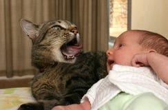 Bebê que está sendo prestado atenção pelo gato fotos de stock royalty free