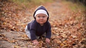 Bebê que joga com a vara nas folhas de outono de queda da floresta video estoque