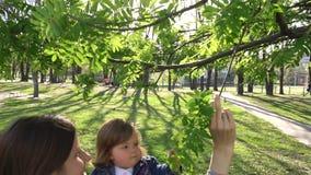 Bebê que olha a árvore grande no parque filme