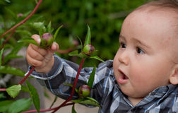 Bebê que olha a flor Foto de Stock Royalty Free