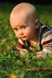 Bebê que rasteja na grama Imagens de Stock Royalty Free
