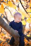 Bebê que senta-se em um ramo Fotografia de Stock Royalty Free