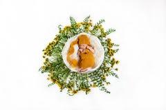 Bebê recém-nascido de sono em uma cesta com as flores amarelas do dente-de-leão lilás e as folhas verdes, em um fundo branco, lug fotografia de stock