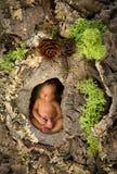 Bebê recém-nascido em um tronco de árvore Fotografia de Stock Royalty Free