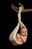 Bebê recém-nascido que pendura em um ramo fotografia de stock royalty free