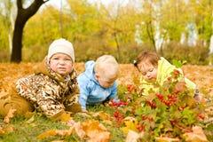 Bebês nas folhas imagem de stock royalty free