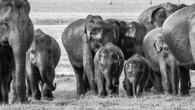 Bebês selvagens do elefante fotos de stock