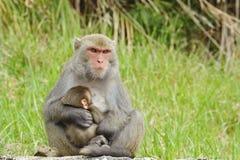 Bebé de amamantamiento del mono Imagenes de archivo