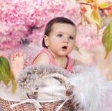 Bebé en cesta con las flores de cerezo Imágenes de archivo libres de regalías