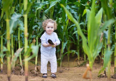 Bebê engraçado e esconder em um campo de milho Imagem de Stock