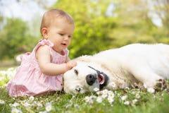 Bebé que se sienta en el campo que acaricia el perro de la familia Fotos de archivo libres de regalías