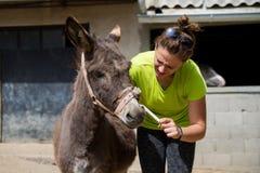 Beba el burro obstinado de la curación Foto de archivo