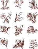 Bebaute Blumen Lizenzfreie Stockfotos