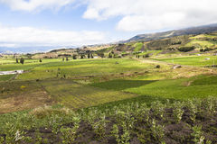Bebaute Felder Stockbild