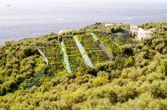 Bebaute Felder durch das Meer nahe Sorrent, Italien Stockfotografie