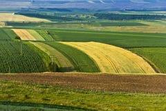 Bebaute Felder während des Sommers Stockfoto