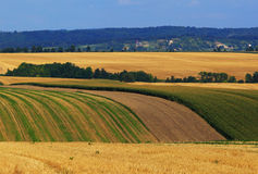 Bebaute landwirtschaftliche Landschaft Lizenzfreies Stockfoto
