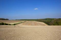 Bebautes Ackerland in den szenischen Yorkshire-Wolds im Frühjahr Stockbild