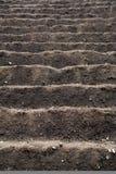 Bebautes Feld bereit zum Pflanzen und zum Säen Stockfoto