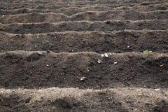 Bebautes Feld bereit zum Pflanzen und zum Säen Lizenzfreie Stockfotos