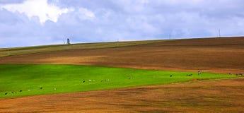 Bebautes Feld der Rind- Weide Lizenzfreies Stockfoto