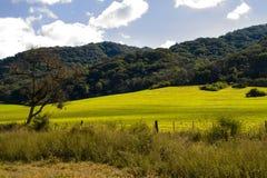 Bebautes Feld im Tal Stockbild