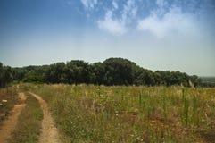 Bebautes Feld mit Wald stockbild