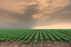 Bebautes Land in einer landwirtschaftlichen Landschaft Lizenzfreies Stockfoto