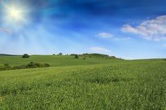 Bebautes Landwirtfeld stockbild