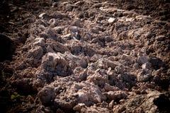 Bebautes landwirtschaftliches Feld, Frühlingsvorarbeit für das Säen und Pflanzen Stockbild