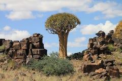 Beben Baum- und Doleritefelsen in Namibia Lizenzfreie Stockbilder