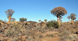 Beben-Baum und Rocky Landscape Lizenzfreie Stockfotos