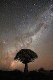 Bebenbaum unter der Milchstraße lizenzfreies stockfoto