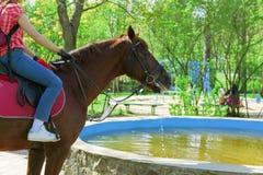 Beber do cavalo. Fotografia de Stock